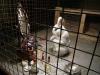 Banksy - Caged White Rabbit